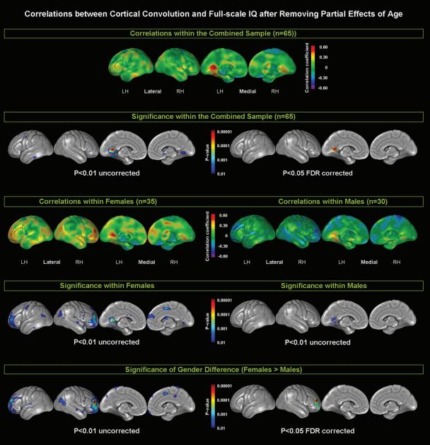 asapscience how your brain works